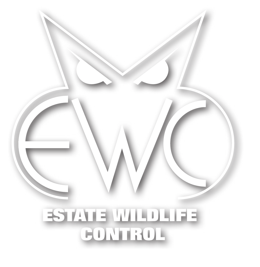 Wildlife control, bat house sales and more