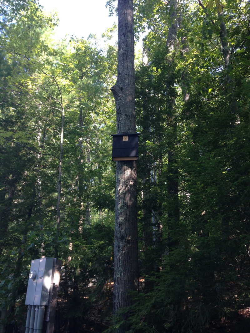 Bat Box Installation - Estate Wildlife Control